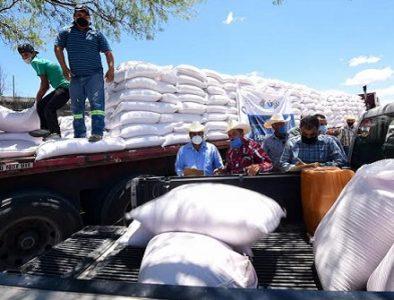 Reciben semilla de avena 300 productores de Coneto de Comonfort, San Juan del Río y Rodeo