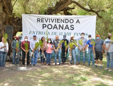 Gobierno poanense entrega 15 mil pinos para reforestación